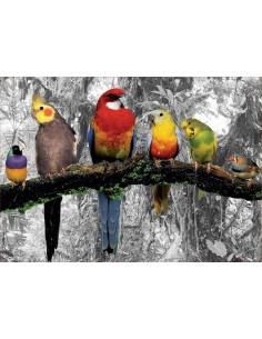 Puzzle 500 piezas Pájaros...